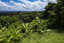 Plain covered by unbroken canopy of tropical lowland rainforest, stretching into the distance, from a lookout point on a hill  French Guiana, France