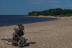 Plain daytime seascape. In the foreground is a large dry tree with massive roots against of a long, evenly curved beach spit. There is a lot of brown sand on the beach. The sea is deep blue.