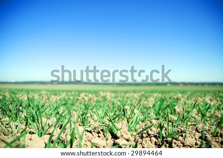 Plain field lanscape of agricultural fertile ground - stock photo