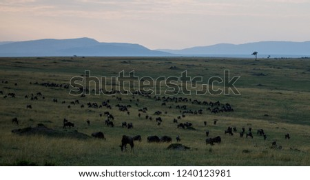 Plain in Masai Mara #1240123981