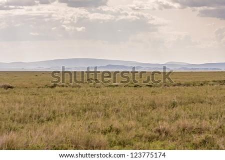 Plain savanna grass field against mountain and cloudy sky background. Serengeti National Park, Tanzania, Africa.