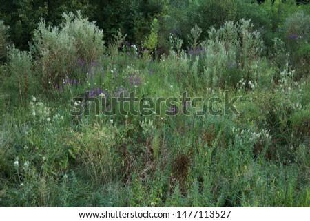Plain vegetation in the countryside #1477113527
