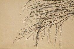 Plain wall, background, texture. Fencing, colored in beige color with the creeping vines. Plastered surface with dry creeping sprigs of grapes. Abstract sketches of nature