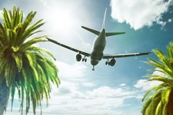 Plane above Palm Trees