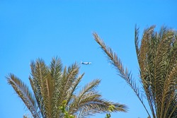 Plane flying high in sky. View to plane between branch of palm trees. Airplane seen in blue sky. Aerial panorama with aircraft and leaves of palm trees. Flying air liner