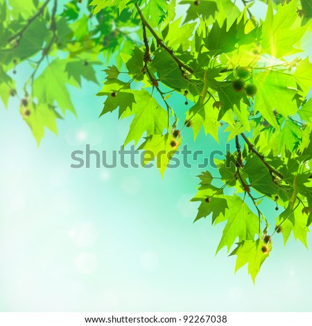 Plane tree leaves on an abstract background