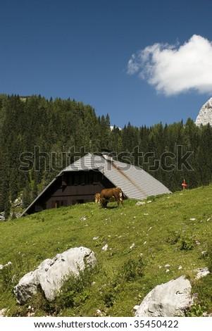 Planina Jezero, Bohinj, Slovenija. Mountain cabin in alps, cattle on the pasture.