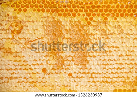 Plank whole honeycombs sealed with beeswax, organic product