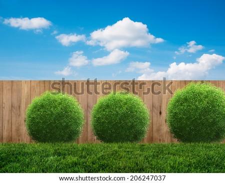 planks in backyard in summer