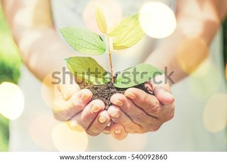 Plant. #540092860