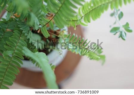 plant #736891009