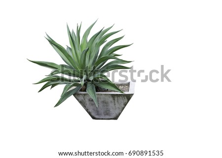 Plant a potted plant isolated on white with clipping path
