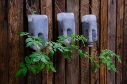 Plant a tomato seedling in a used bottle. Hang it on the leak, do not have to ground it. Recycled gardening ideas