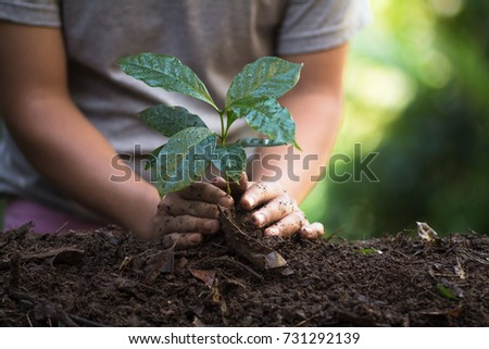 plant a tree natural background Plant Coffee seedlings in nature green fresh - Shutterstock ID 731292139