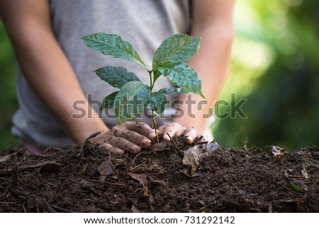 plant a tree natural background Plant Coffee seedlings in nature green fresh - Shutterstock ID 731292142