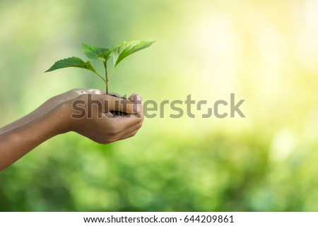 plant a tree.Symbol of spring and ecology concept #644209861
