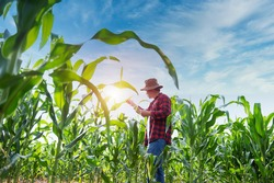 Plant agronomists use the main mobile internet network to validate, test, and select new cultivation methods. Young farmers and sugarcane farming