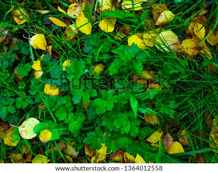 Plant and yellow leaves on the grass top view #1364012558