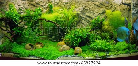 plant aquarium aquascaping