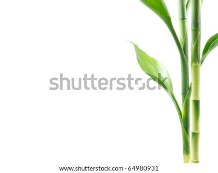 Plant border