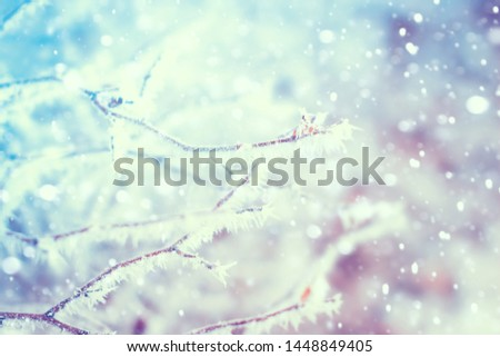 Plant branch covered with frost. Winter snowy nature background #1448849405