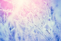 Plant branch covered with snow frost. Winter nature background with sunshine