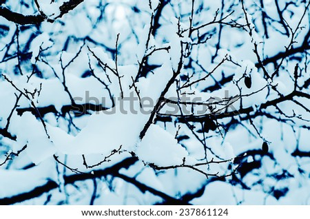 Plant branch under the snow, blue natural vintage winter  background, macro image #237861124