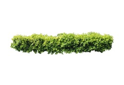 Plant bush,Tree isolated on white background,This has clipping path.