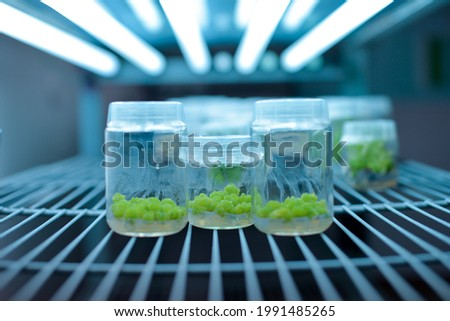 Plant callus tissue culture, biology science for plant regeneration. Various plants cultivated in vitro in dishes and tubes in nutrient medium, biotechnology concept In vitro growth medium. ストックフォト ©