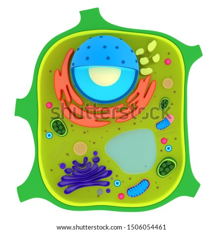 Plant cells are eukaryotic cells present in green plants, photosynthetic eukaryotes of the kingdom Plantae.