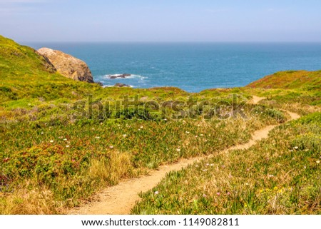 Plant-covered promontory with wildflowers and narrow dirt trail that winds toward Pacific Ocean in Marin Headlands, Golden Gate National Recreation Area, California, USA, on a sunny day early in June #1149082811