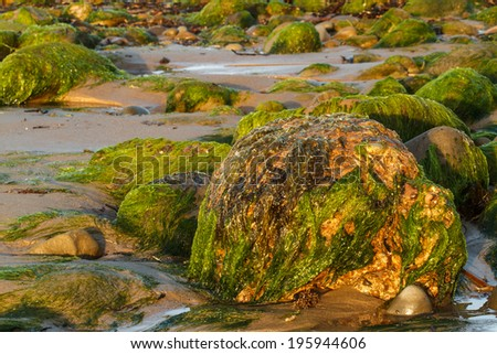 Plant covered rocks at low tide on the shore.