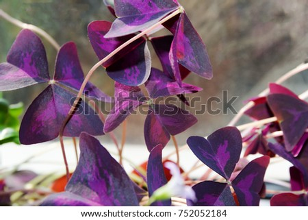 Plant. Decorative plant. Decorative flower. Purple casting #752052184