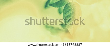 Plant, ecology and bio concept - Green leaves as abstract vintage nature background, herbal foliage in spring garden, retro gravure style, floral leaf backdrop for botanical holiday brand design Photo stock ©
