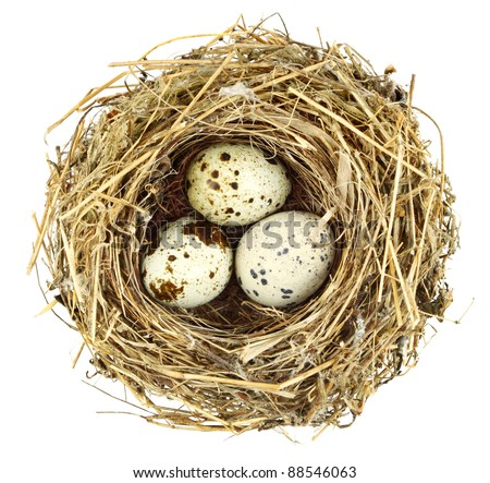 Plant fragments constructed bird nest with eggs. stock photo
