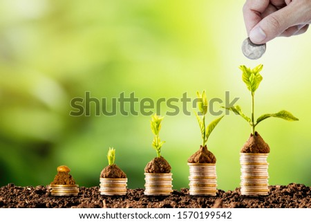 Plant glowing on coins stacking on soil and greenery background.Dividend of Banking Deposit and stock investment concept.  Photo stock ©