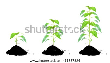 Plant green and soil