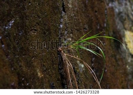 Plant growing from a rock. Conceptual photo for perseverence, tenacity