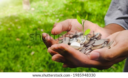 Plant growing from coins on nature background hood by a man's hands - business and financial metaphor concept, web banner with copy space Photo stock ©
