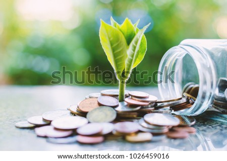 Plant growing from coins outside the glass jar on blurred green natural background for business and financial growth concept #1026459016