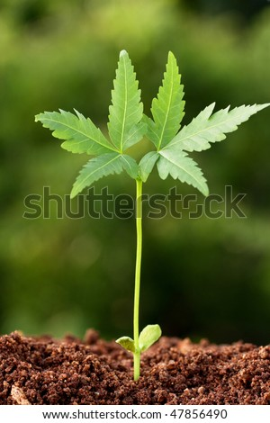 Plant growing from soil