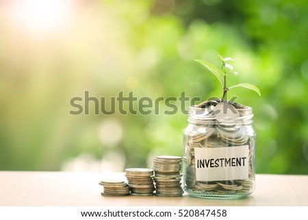 Plant growing  in Coins glass jar with investment paper label for money saving and investment financial concept