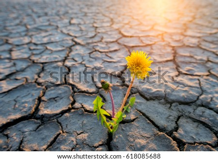 plant growing in desert drought concept