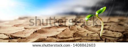 Plant Growing In Hot Dry Desert With Sunshine And Rain Storm Coming On The Horizon - New Life / Hope Concept Stockfoto ©