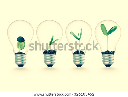 plant growing in lightbulb  ...