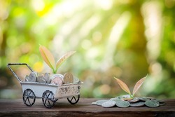 Plant growing in saving coins in the wheel barrow for business concept