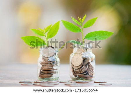Plant Growing In Savings Coins - Investment And Interest Concept Foto stock ©
