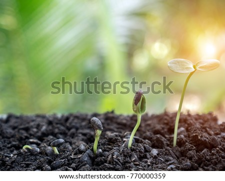 plant growing like a potential graph  with sun light and blur green nature bokeh background ,start up or growth of young business financial concept, small business potential. Stockfoto ©