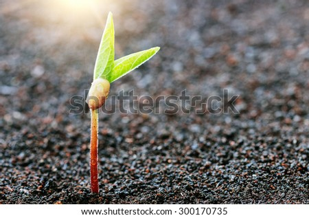 plant growing on soil spring season background