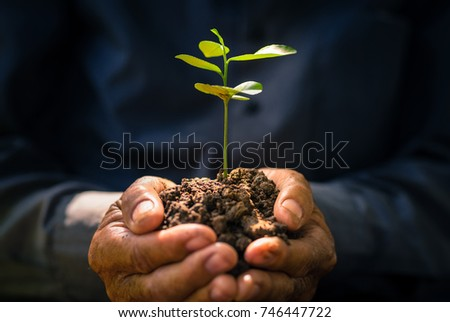 Plant growing on soil with hand holding over sun and sunlight
